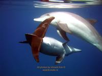 Amazing Underwater Photos 2dolphins_small