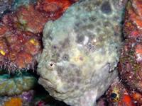 Amazing Underwater Photos DSCN1911_small