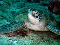 Amazing Underwater Photos DSCN2058_r_small