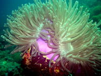 Amazing Underwater Photos DSCN2087_r_small