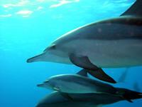 Amazing Underwater Photos Dolphins_small