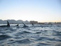 Amazing Underwater Photos Dolphinstop_small