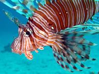 Amazing Underwater Photos Dragon_small