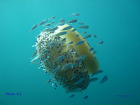 Amazing Underwater Photos FJF_photo_GJ_small