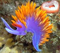 Amazing Underwater Photos SantaRosa060_small