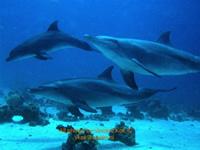 Amazing Underwater Photos VincentKok_small