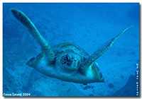 Amazing Underwater Photos ATurtle_small