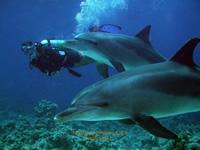 Amazing Underwater Photos Luckyjoep_2_small